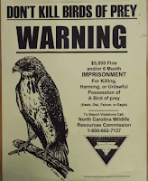 Eagle is prohibited to kill