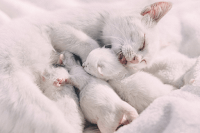 kittens without mother