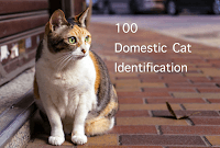 Domestic Cat Identification