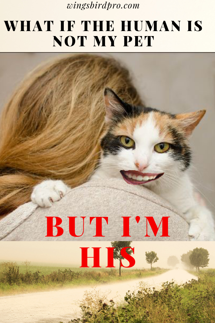why cat like to you