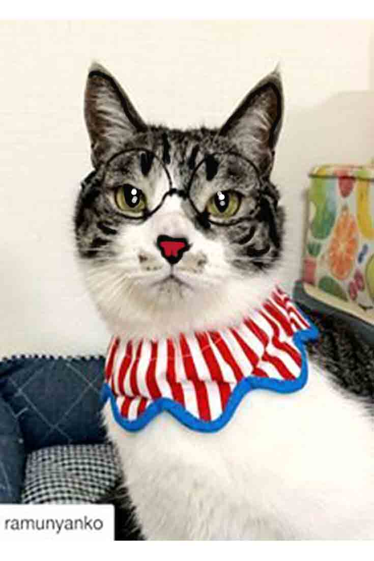 Cats Pet Clothes Ideas