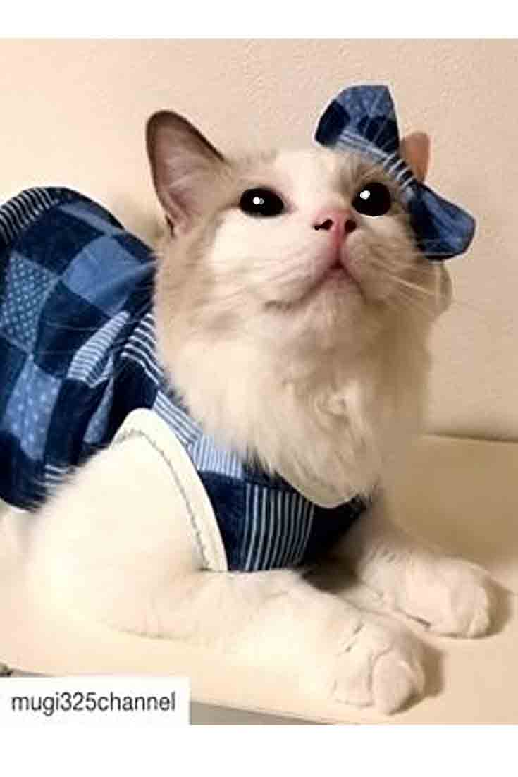 Cat Clothes Ideas