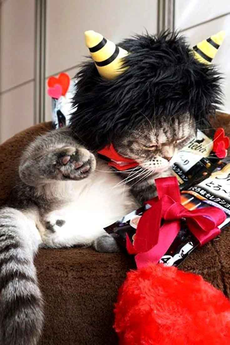 Beautiful Japanese Cats Images