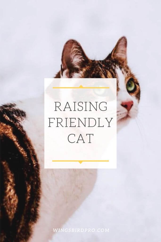 raising friendly cat