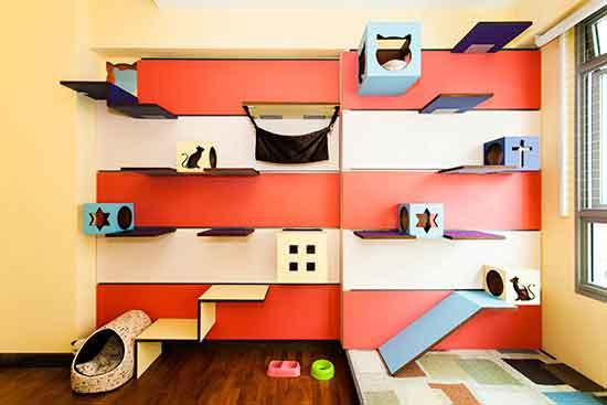 Creative Ideas Cat Room Decorating